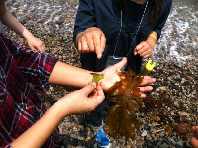 kinosaki_seaweed